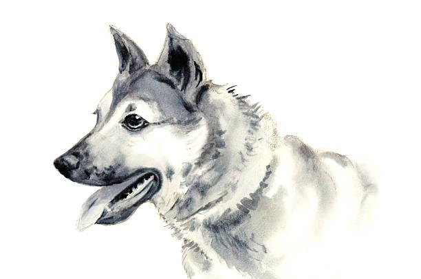 Dog Portrait Watercolor Sketch vector art illustration