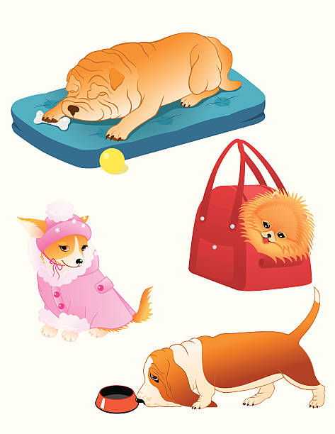 hund set. - hundebetten stock-grafiken, -clipart, -cartoons und -symbole