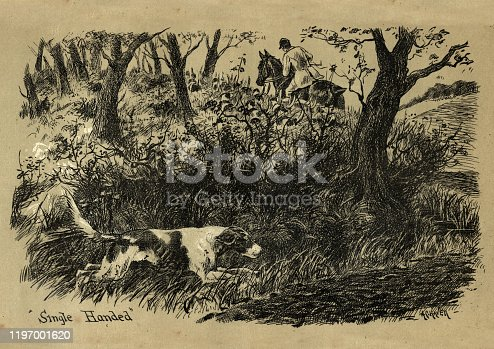 Vintage engraving of Dog single handed flushing out the fox, Victorian, 19th Century. A fox in the chimney