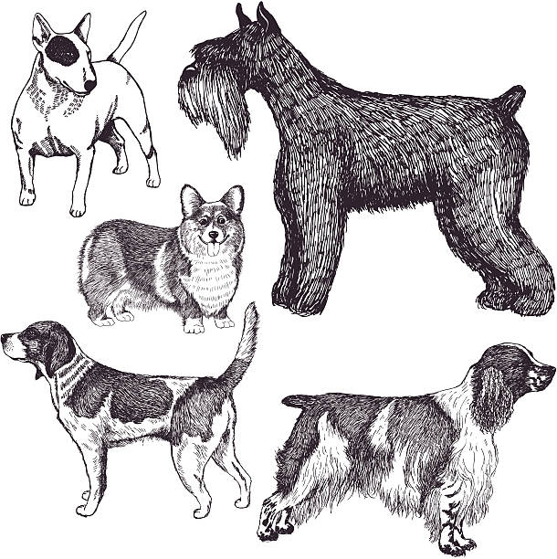 Dogs Dogs set animal stage stock illustrations