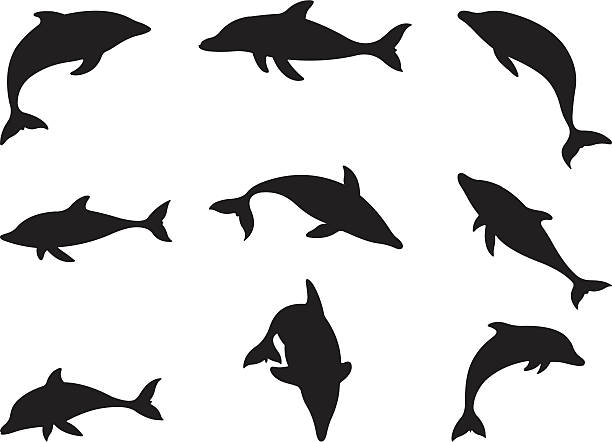 Dolphins in action vector art illustration