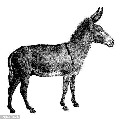 Old engraving of a donkey, isolated on white. Scanned at 600 DPI with very high resolution. Published in Systematischer Bilder-Atlas zum Conversations-Lexikon, Ikonographische Encyklopaedie der Wissenschaften und Kuenste (Brockhaus, Leipzig) in 1844. Photo by N.Staykov (2008). .