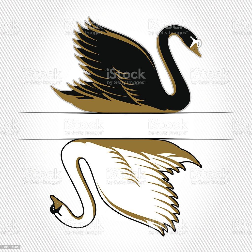 double swan vector art illustration