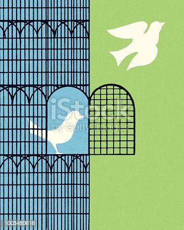 Dove Flying Out of a Bird Cage