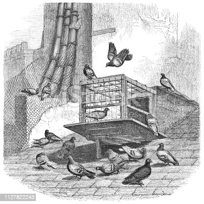 Entrance of a dovecote for carrier pigeons in Paris, France used during the Siege of Paris in 1870-1871 during the Franco-Prussian War from Magasin Pittoresque. Vintage etching circa mid 19th century.