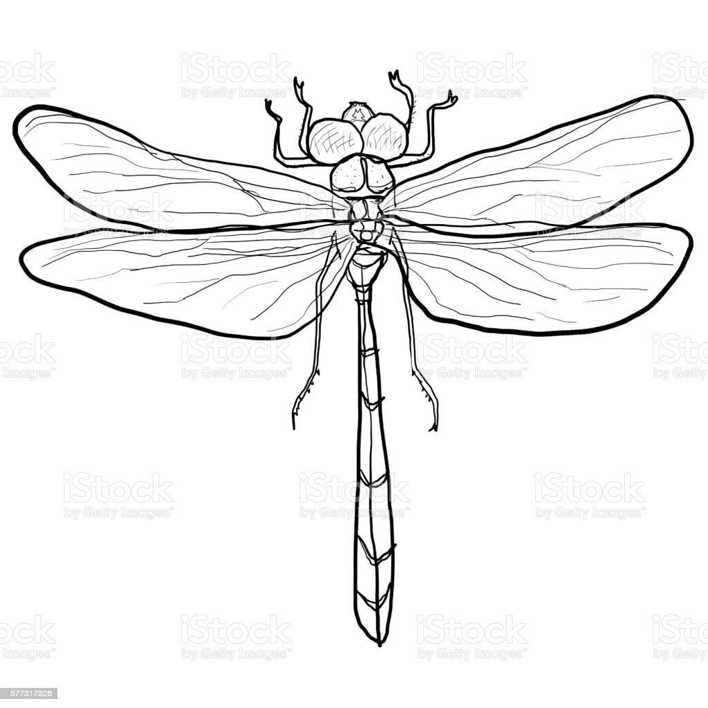 Dragonfly Lineart Stock Vector Art & More Images of Animal Wildlife ...