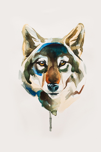 Desenho De Cabeca De Lobo Arte Vetorial De Stock E Mais Imagens