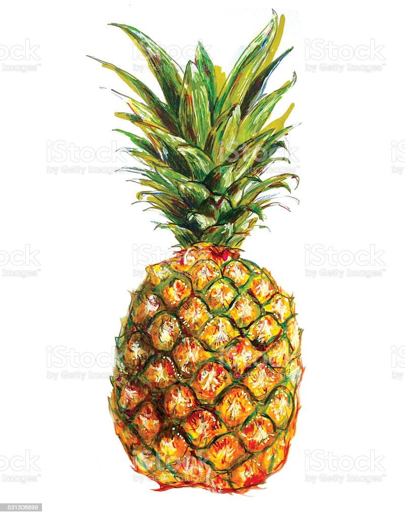 drawing of a single pineapple stock vector art 531306899
