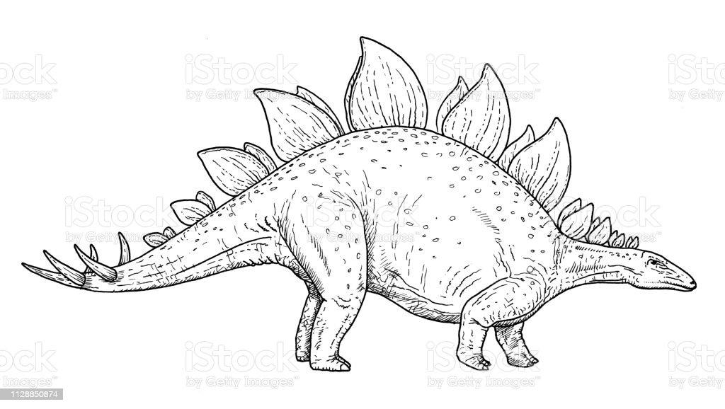 Dinozor Stegosaurus Siyah Ve Beyaz Illustrasyon El Kroki Cizim