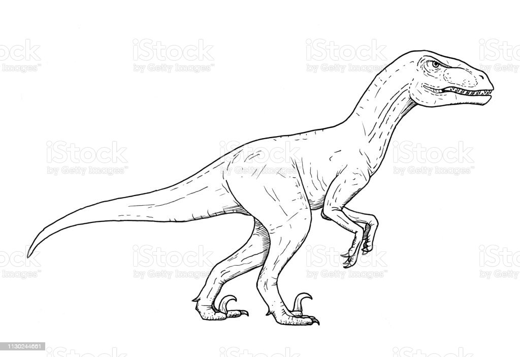 Drawing Of Dinosaur Hand Sketch Of Velociraptor Black And White