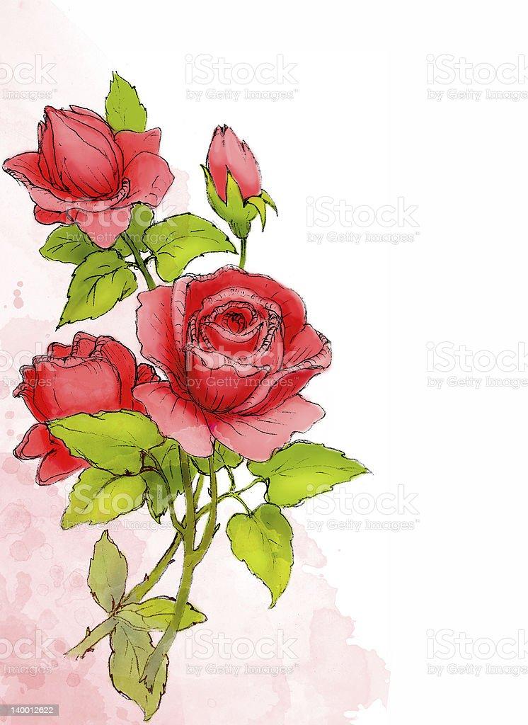Ilustración De Dibujo De Rosas Rojas Y Más Banco De Imágenes De