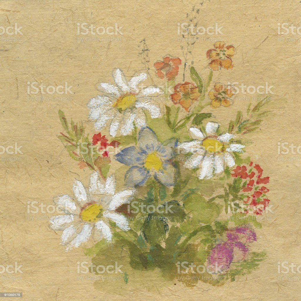 drawing of spring wild flowers xxl resolution stock vector art
