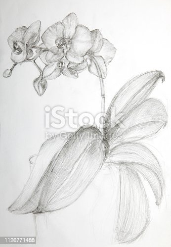 Drawing orchid flower