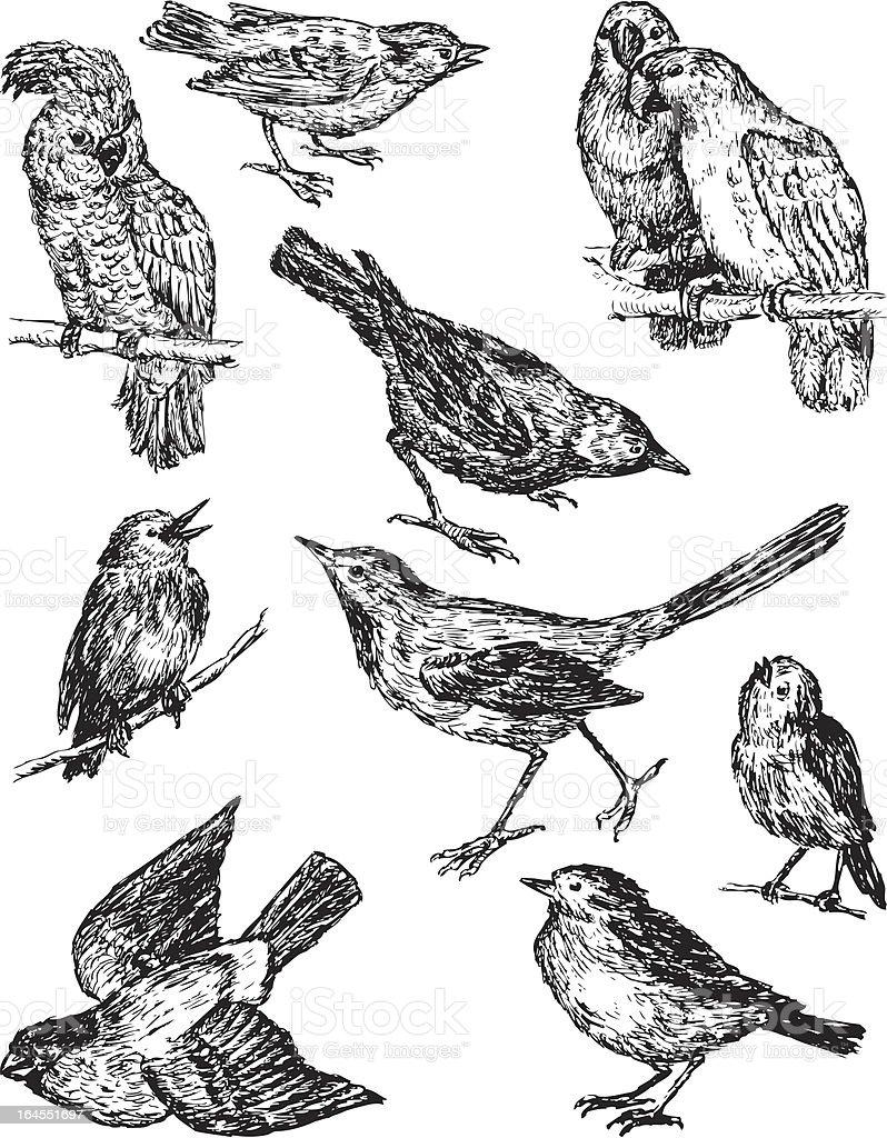 drawings of birds stock vector art 164551697 istock