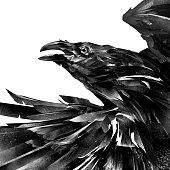 art designer portrait of a raven on a white background