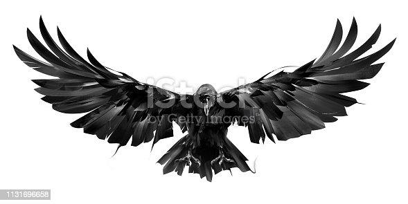 drawn raven bird in flight on a white background