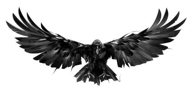 illustrations, cliparts, dessins animés et icônes de oiseau de corbeau dessiné en vol sur un fond blanc - tatouages ailes