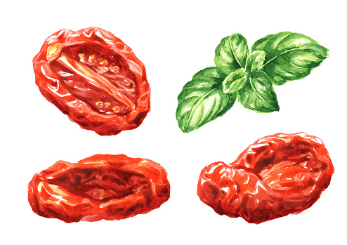 Dried tomatoes and Fresh basil leaves set. Hand drawn watercolor illustration, isolated on white background