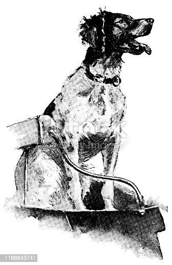 Duck hunting dog in North Dakota, USA. Vintage etching circa late 19th century.