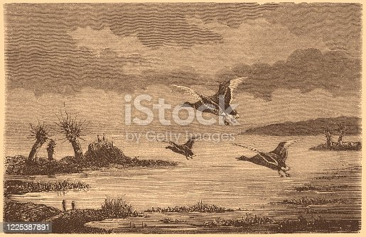 istock Ducks flying 1225387891