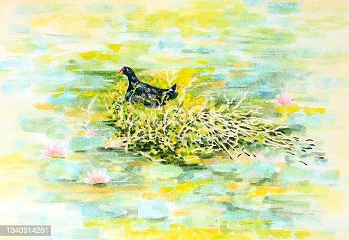 istock Dusky Moorhen Water Bird Nesting Watercolour Painting 1340614251