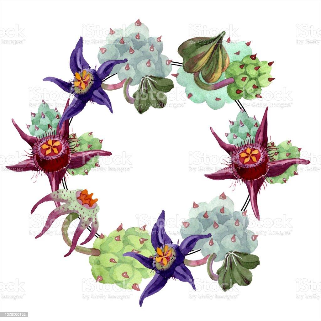 Duvalia Flower Watercolor Background Illustration Set Frame Wreath Aquarelle Hand Drawing Succulent Stock Illustration Download Image Now Istock