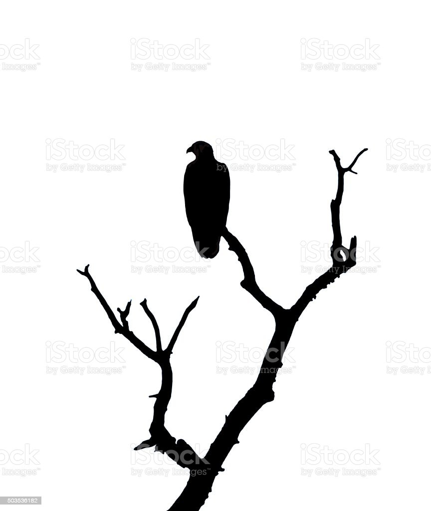 Eagle Bird Perched Silhouette Stock Illustration Download Image Now Istock Or, print both files (preferably in different colors) and glue them. https www istockphoto com vector eagle bird perched silhouette gm503536182 82582325