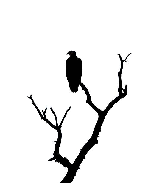 Royalty Free Perched Eagle Clip Art, Vector Images