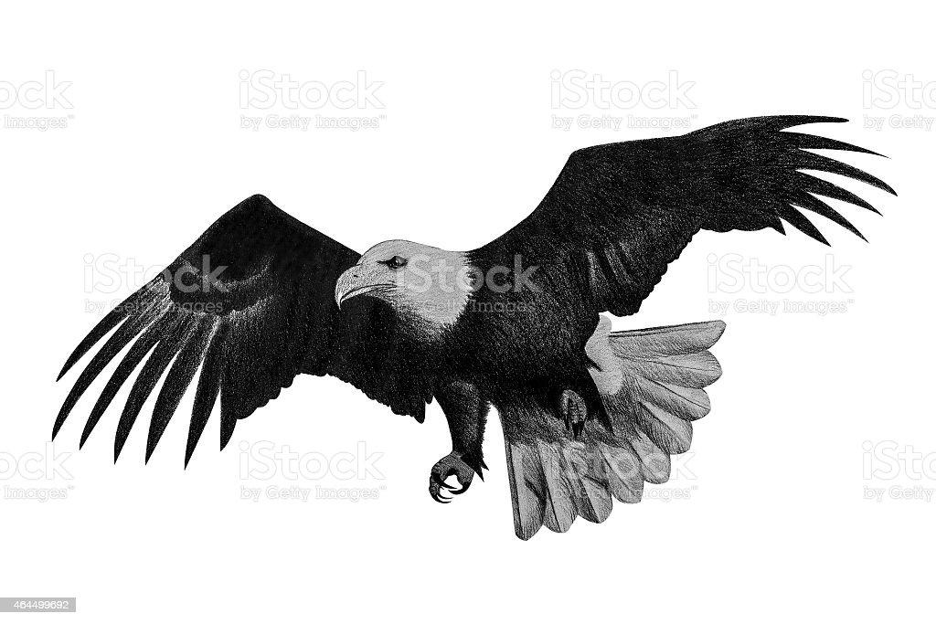 Eagle Disegno A Matita Immagini Vettoriali Stock E Altre Immagini