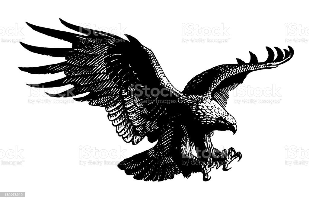 Eagle vector art illustration