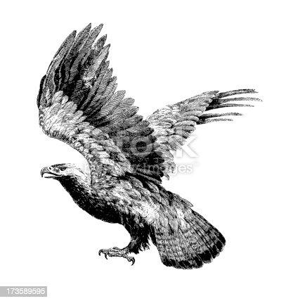 istock Eagle (Isolated on White) 173589595
