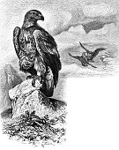 Eagle observes the fight of two other eagles. Copy space visible - 1888