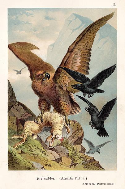 Eagle with hare illustration 1888 - ilustración de arte vectorial