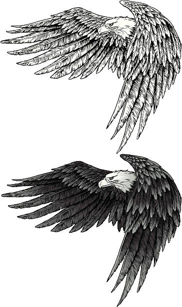 Eagle with wings vector art illustration