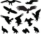 Hunting eagle detailed vector silhouettes set