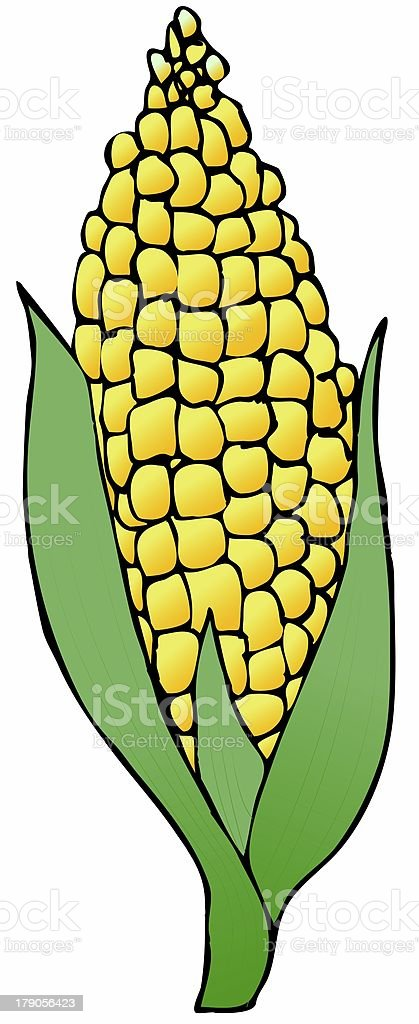 Ear Of Corn vector art illustration