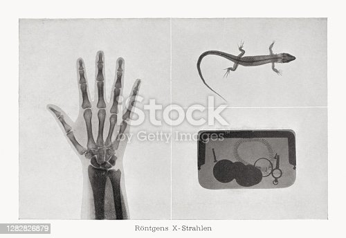 Early x-rays: human hand, lizard, and leather handbag with utensils (iscrews, coins, spiral spring, plug). Raster halftone print after photographs, published in 1899.