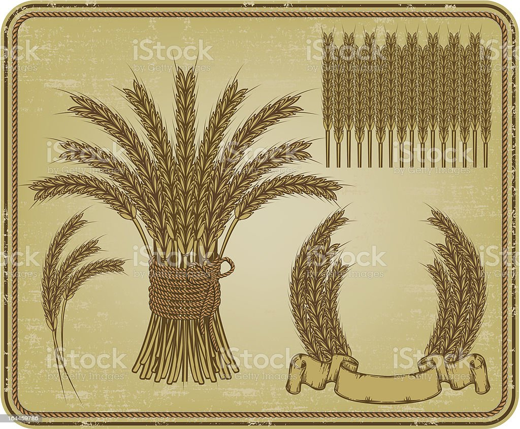 Ears of wheat, set. Vector illustration. vector art illustration
