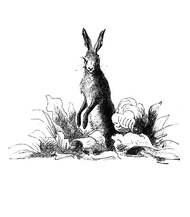 Easter rabbit on a meadow