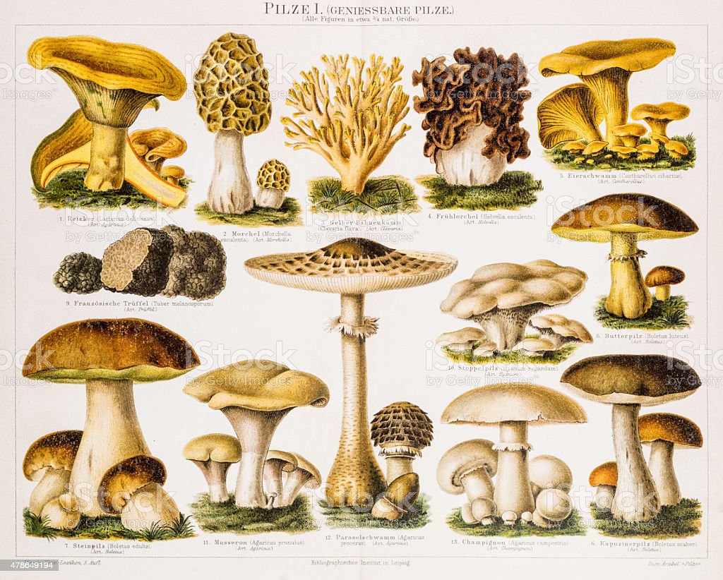Edible Mushrooms Antique Chromolithograph 1896 vector art illustration