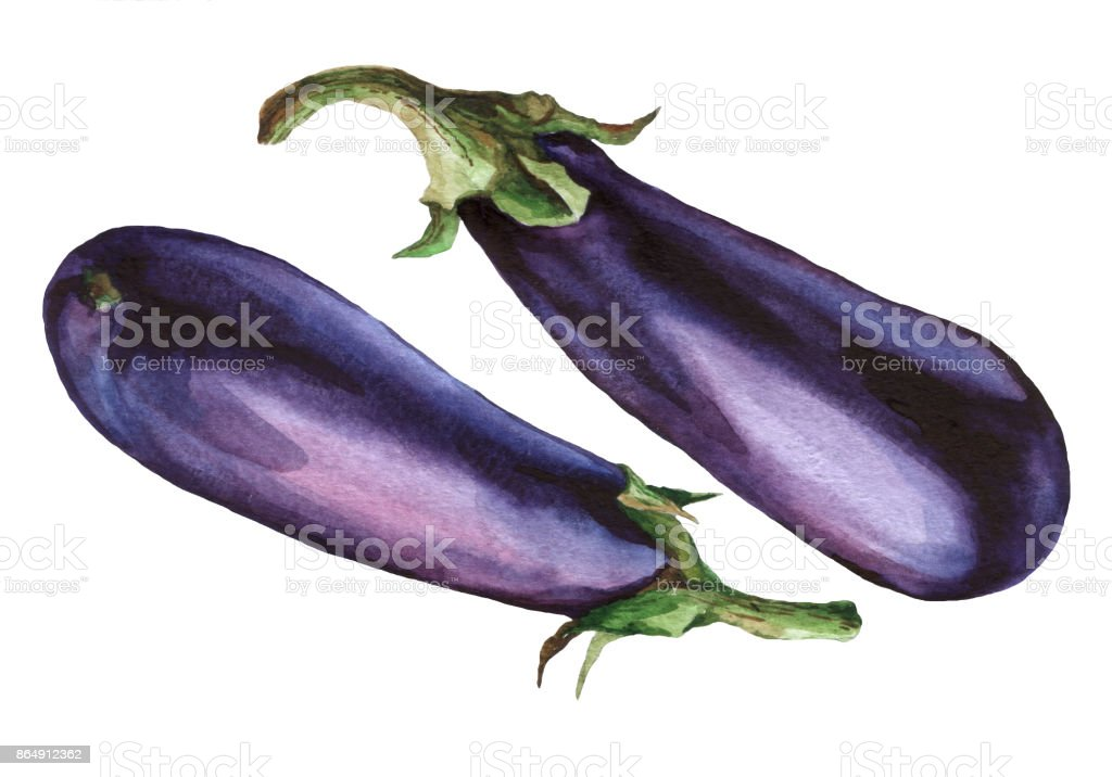 Eggplant. Hand drawn watercolor painting on white background. vector art illustration
