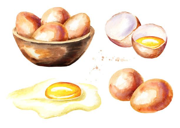 bildbanksillustrationer, clip art samt tecknat material och ikoner med ägg set. akvarell handritad illustration isolerade på vit bakgrund - ägg