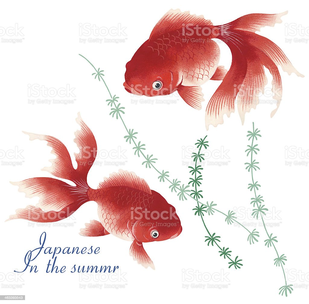 elegant fish vector art illustration