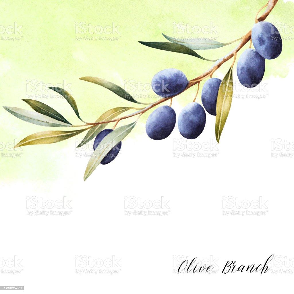 Elegant watercolor background with olive branch. vector art illustration