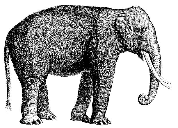 illustrations, cliparts, dessins animés et icônes de éléphant antique animaux/illustrations - partie du corps d'un animal