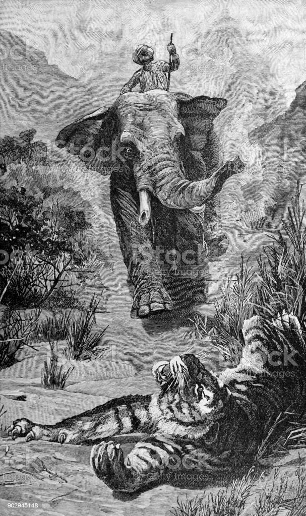Elephant charging a wounded tiger vector art illustration