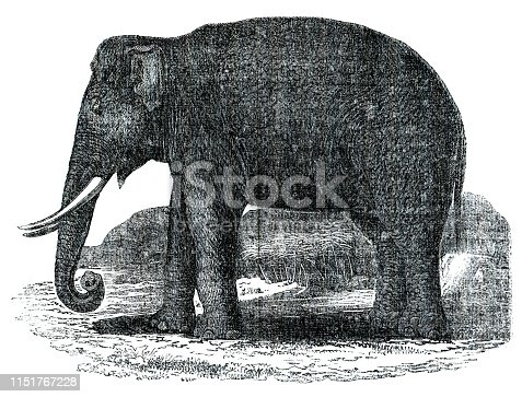 Steel engraving of Elephant Original edition from my own archives Source :