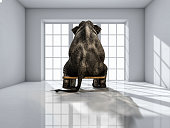 istock elephant sitting on chair 637537716
