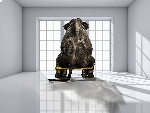 elephant sitting on chair lonely elephant sitting in the room for commercials domestic room stock illustrations
