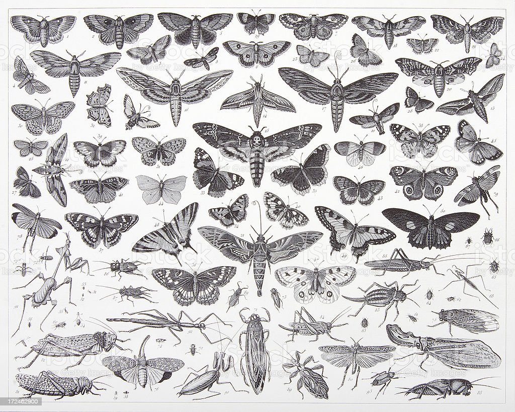 Engraving: Insects royalty-free stock vector art